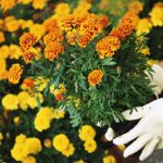 gardening-tips-1